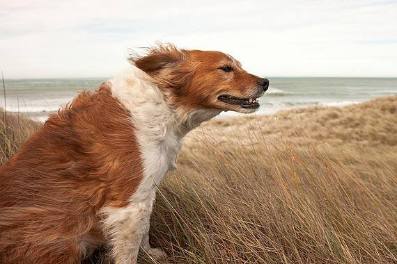 Uwaga, będzie dzisiaj wiało! Wiatr w porywach może osiągnąć nawet 90 km/h!