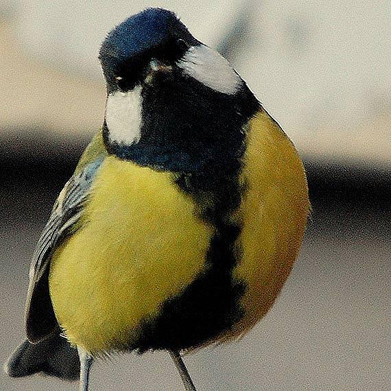 W marcu będą wieszać na drzewach kolejne budki dla ptaków