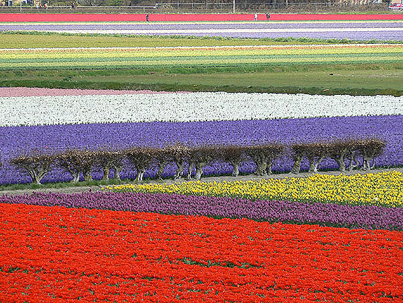 Królestwo tulipanów otworzyło swoje podwoje!