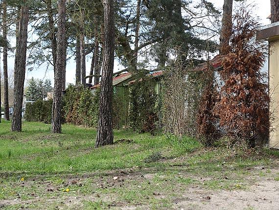 """Drzewka nie chcą żyć na """"Sezamkowej"""""""