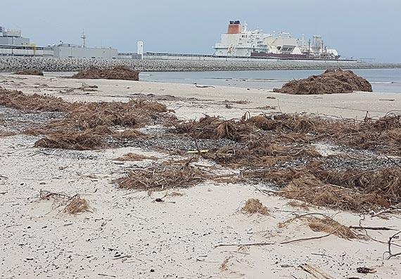 Miasto nie będzie sprzątać plaży na Warszowie. Kidzina jest pod ochroną