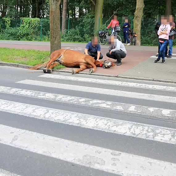 Koń poślizgnął się na zebrze! Konieczna była interwencja weterynarza. Zobacz film!