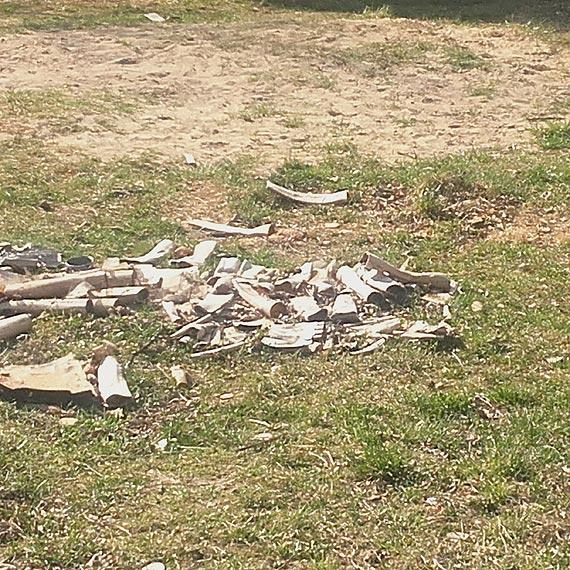 Czy to zalążek nielegalnego wysypiska śmieci w środku osiedla?