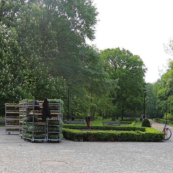 Czym zaskoczy nas nowa estetyka zieleni w Parku Zdrojowym?