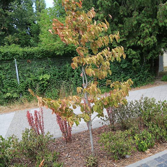 Te drzewa mogły uschnąć na dobre. Deszcz je uratuje?
