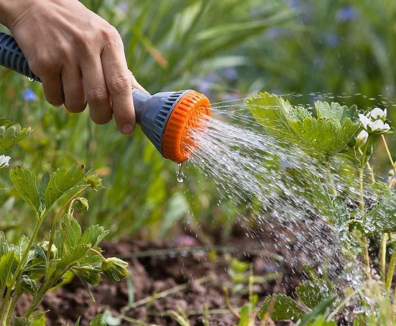 Oszczędne nawadnianie latem, czyli jak podlewać, by nie marnować wody