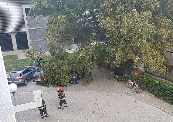 Gałąź uszkodziła zaparkowany samochód