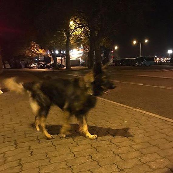 Komu zaginął pies?