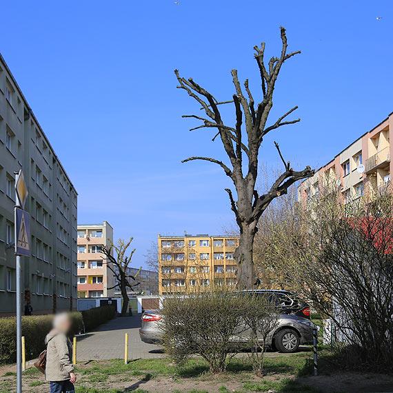 """Czy drzewa trzeba przycinać """"po barbarzyńsku""""?"""
