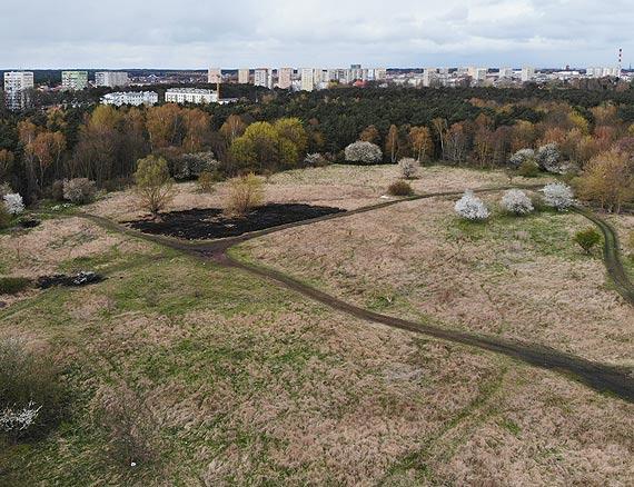 W parku czy na wysypisku śmieci? Miasto pyta, gdzie chcecie wybieg dla pupilków