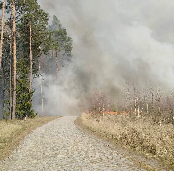 Pracowite święta strażaków i leśników