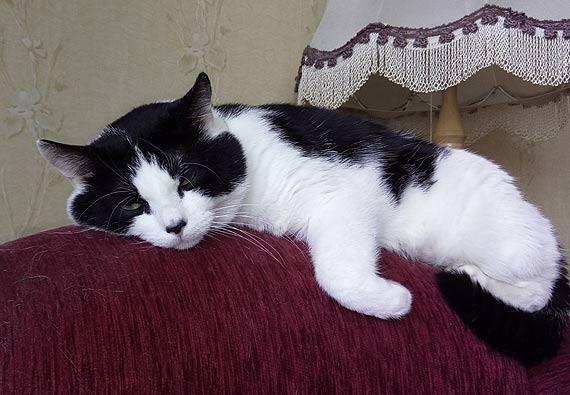 Zaginął kotek o imieniu Marysia