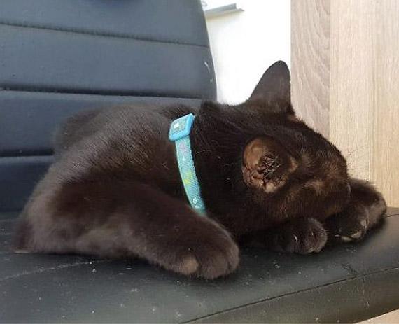 Znaleziono czarnego kotka