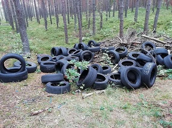 W lasach rosną grzyby i... sterty śmieci