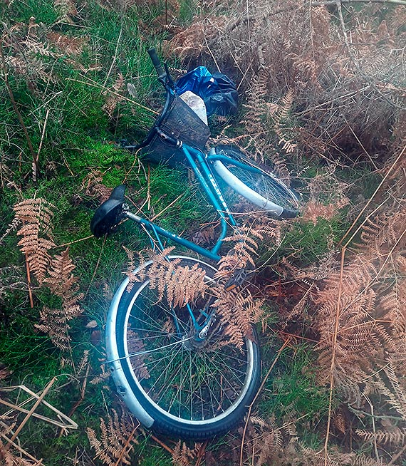 Rower w paprociach